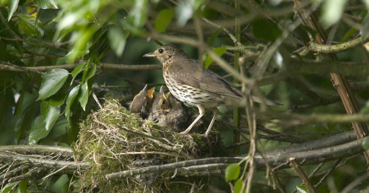 Hedge Blog Header august hedges and their benefits for wildlife